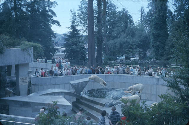 StanleyParkPolarBears