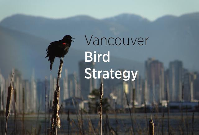 BirdStretegy