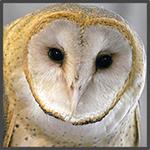 owl-profile-passchier