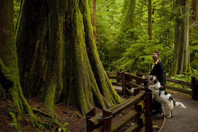 A man and his dog exploring the trails in the Cathedral Grove forest.  One of the few remaining sections of old growth forest.