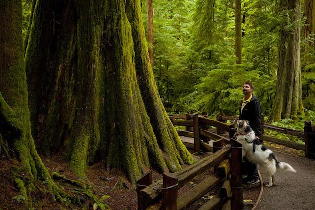 Dog Parks Vancouver