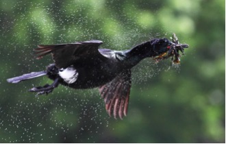SPES-Birds2