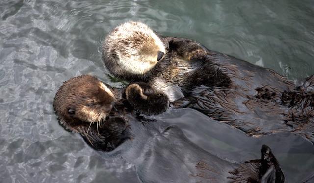 Tanu And Katmai Rafting