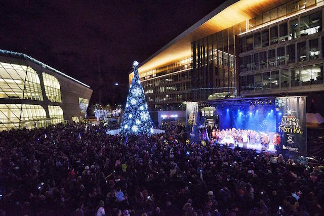 SurreyTreeLighting