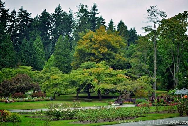 Stanley_Park_Trees