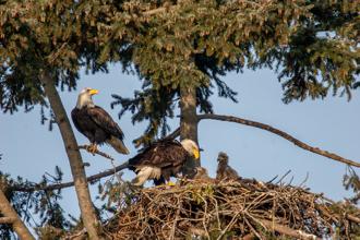 Eagles-MarkTWhite