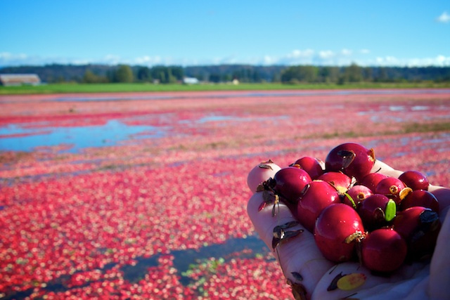 fortlangleycranberries
