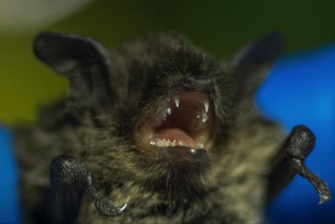 bats-stanleypark1