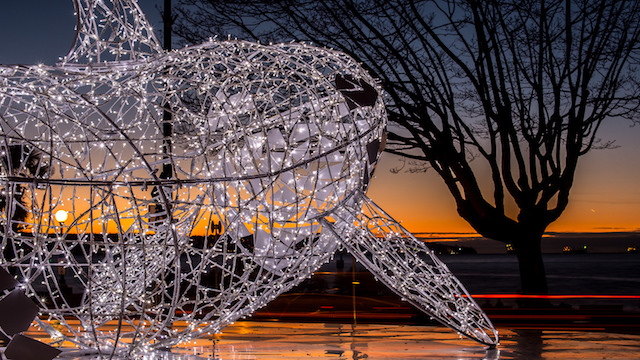 lumierefestival-westend-whale