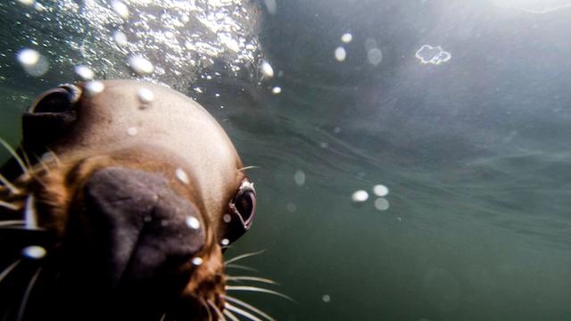 Vancouver Aquarium After Hours - Sea Lion